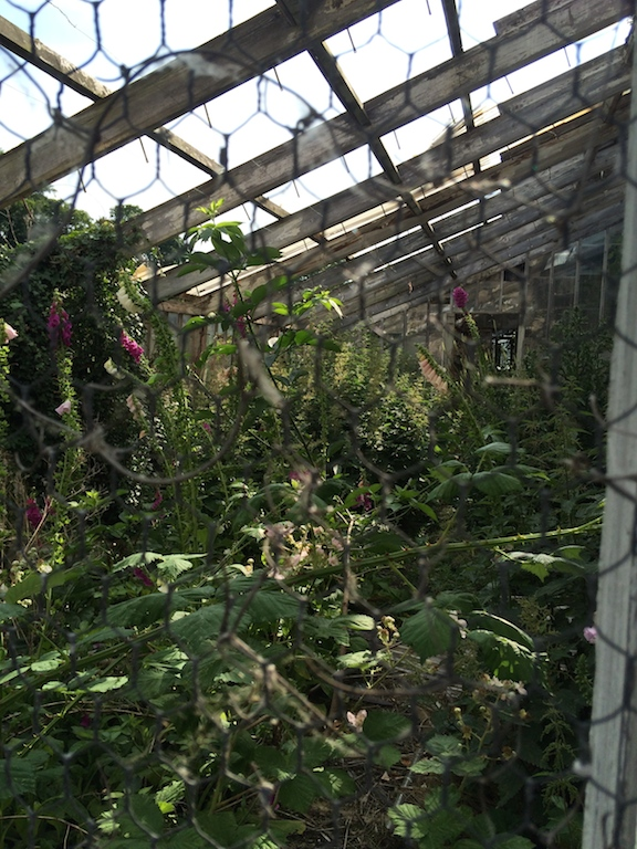 Fordham_Abby_Greenhouse_2