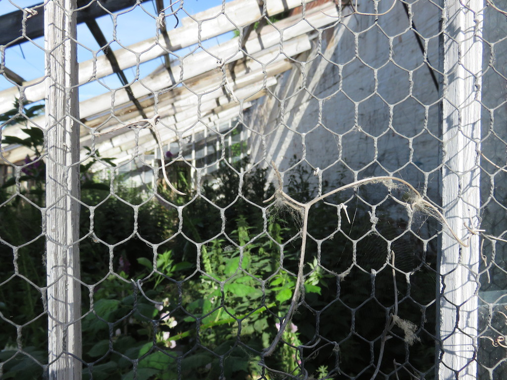 Green House Renovation Project
